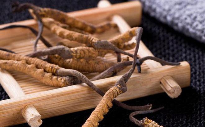 Đông dược quý đông trùng hạ thảo có đối tượng người sử dụng đa dạng