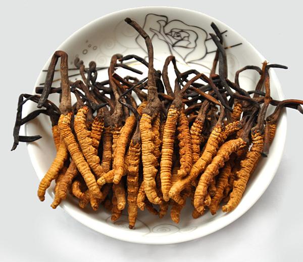 Đông trùng hạ thảo là một trong ba loại thuốc bổ thiên nhiên tốt nhất