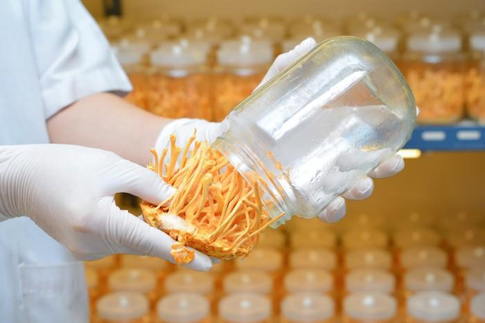 Công dụng của đông trùng hạ thảo