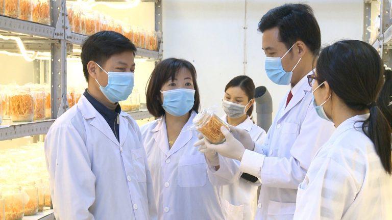 nghiên cứu đông trùng hạ thảo