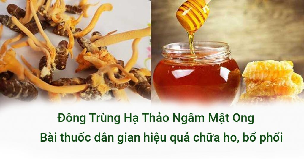 Đông Trùng Hạ Thảo ngâm mật ong trị ho hiệu quả