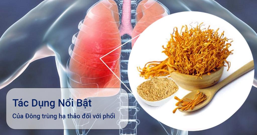 tác dụng đông trùng hạ thảo với phổi