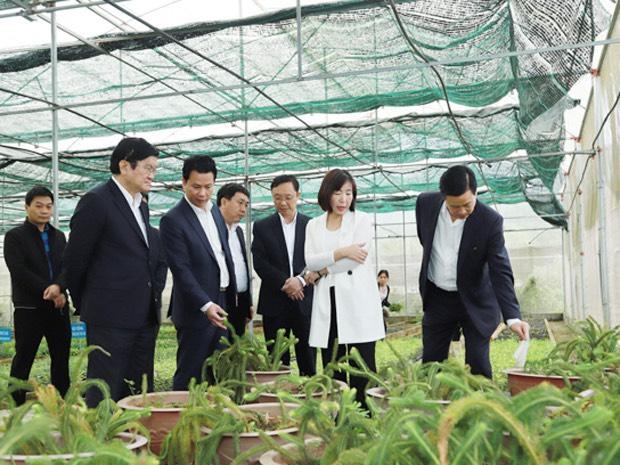 vườn nhân tạo nuôi trồng đông trùng hạ thảo