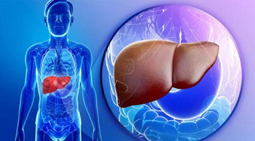 tác dụng đông trùng hạ thảo với gan