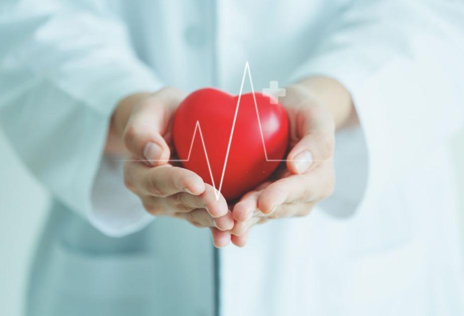 đông trùng hạ thảo tốt cho tim mạch